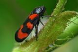 Jardin flore et insectes