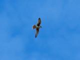 Green Birding: Taxonomic Order