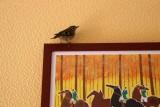 Oiseaux de nos campagnes
