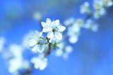 Fleurs de nos jardins et de nos champs