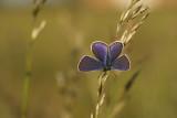 Papillons - Butterflies of our region