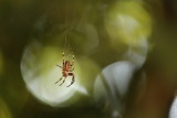 Araignées - Spiders