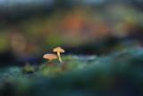 Champignons -  Mushrooms