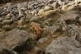 Le champs de roche de Barbey-Seroux, un mystère pour les géologues