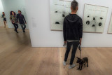 A Dog in a Museum?