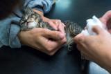 A Broken Kitten