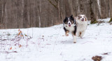 A Romp in the Winter Woods
