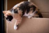 Here Comes the Calico