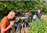 Twitching birders, mostly in the Netherlands