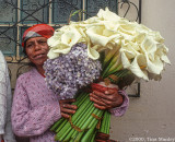 Lenca Flowers