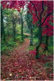 Autumn near Betws y Coed