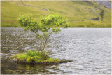 Lonely tree at Cwm orthin