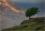 manod-tree.jpg