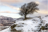 Tree on the way up to Llyn Manod