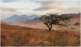 A tree in Cwm Edno with Yr Wyddfa in the background