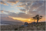 Lonely tree at Cwm Edno