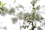 Le temps des arbres en fleurs 2019