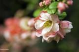 floraison_2020