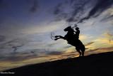 La Camargue, terre de chevaux