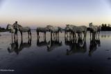 Les chevaux et l'eau