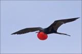 Birds of the Galápagos