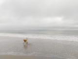 Larkin in the Mist.jpg