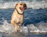 Beach Dog.jpg