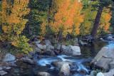 Fall Trees Laced Creek