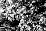 march_signs_of_the_seasons_2021
