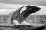 Whales, Puffins and Other Sea Life