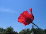 Lest We Forget---DDay June 6, 1944