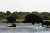 Live Oaks have been in water for more than 150 days, hoping they survive