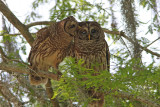 Whooo loves you...