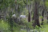 My Louisiana as seen through my camera lens