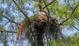 Birds in Louisiana