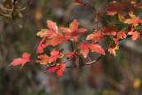 Autumn in the Louisiana Wetlands