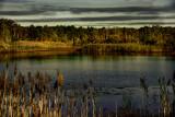 Edwin Forsythe National Wildlife Refuge