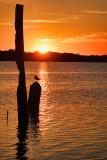 Sunrise with Gull