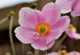 flowers_gallery_2