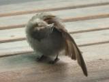 Sparrow 5