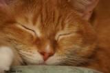 Ginger qui relaxe