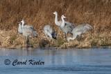 Cranes Standing Guard