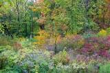 Autumn Color Riot