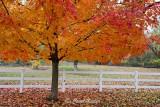 Autumnal Splendor