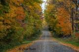 Fall on Burke Rd