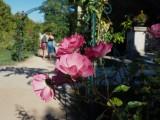 Jardin des Plants