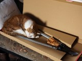The cat sat in the box