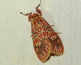 Moth 2 cm