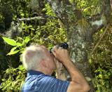 Kurt take pictures of Dendrobium denudans and Oberonia falconeri