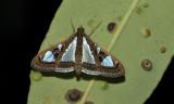 Nam  Nao Moth no ID.